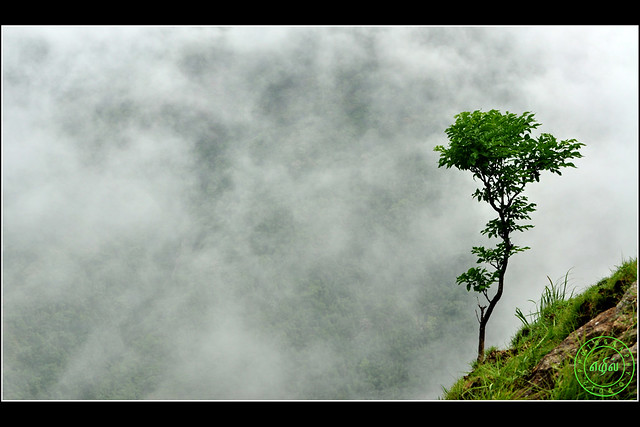 Tree in Cloud