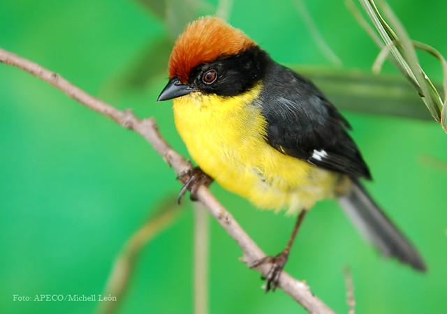FOTOS DE MICHELL LEON Biodiversidad Tilacancha 4