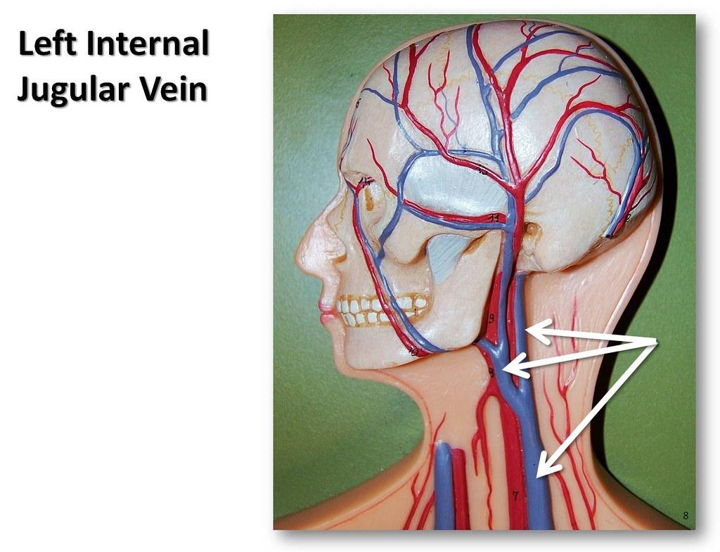 jugular vein pressure - HD1024×785