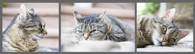 Triptychon21 Katze