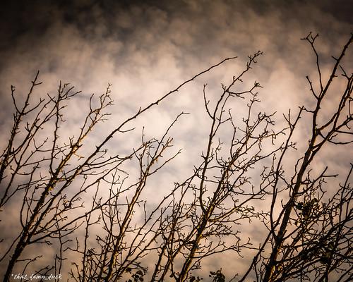 nature treelimbs sundown sunset clouds