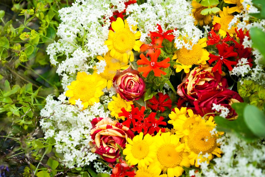 Belissimas flores !! DSC_4185