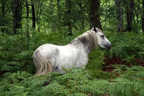 Horse / Cabalo | by Iago.