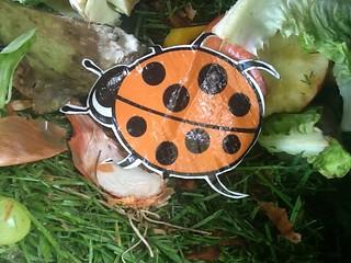 An ftt ladybird moulders on rotting fruit and veg