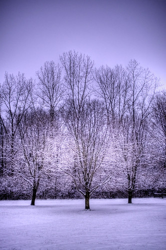 trees snow landscape hdr fairborn communitypark fairbornohio fairbornoh byalexsablan