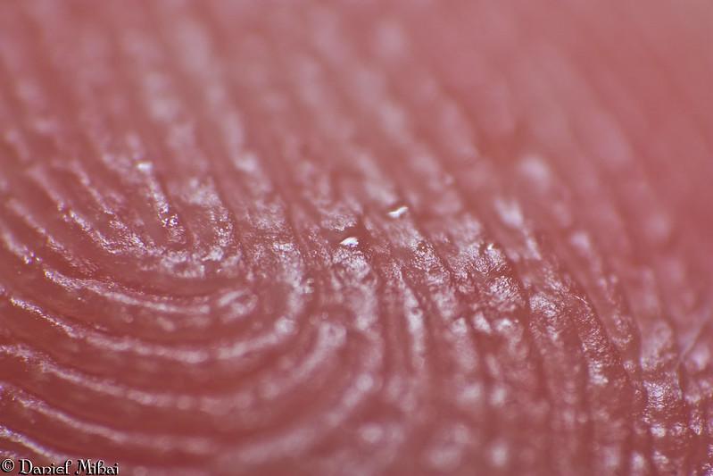 Fingerprints by Daniel Mihai