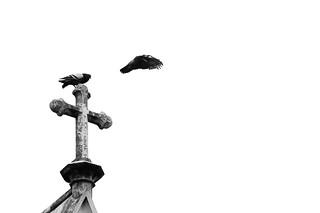 Palomas en vuelo | by Matías Garrido Hollstein