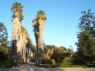 Дворец и ботанический сад Ажуда в Лиссабоне, туры и отдых в ...   240x320