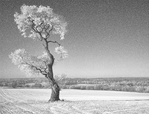 Ria`s Tree