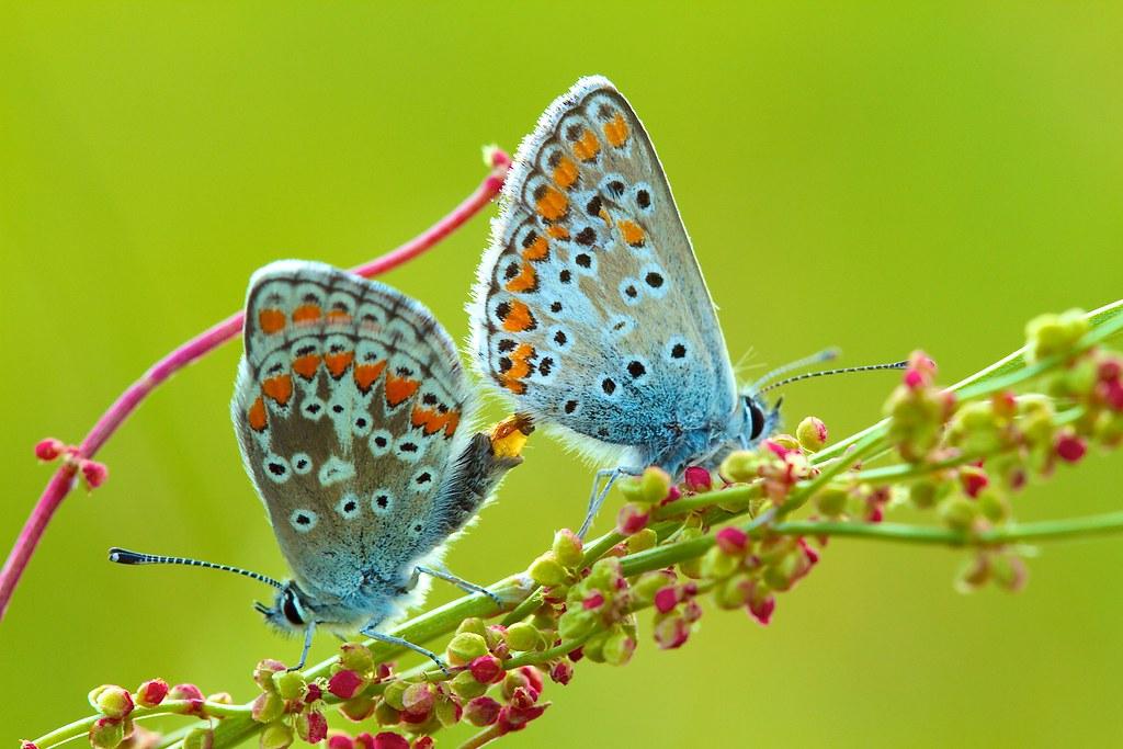 Butterflies sex, teen girl hand jop