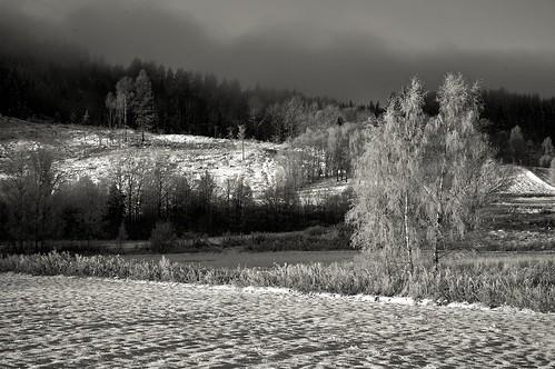 wood trees winter blackandwhite bw monochrome norway clouds digital sunrise landscape norge cosina rangefinder wideangle epson rd1 ultron hillestad mmount voigtländer 28f19 digitalrfbw ©edrussellroberts