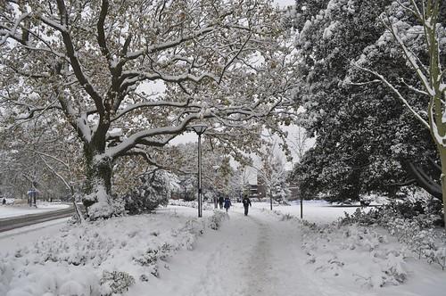 Snowy Highfield Campus