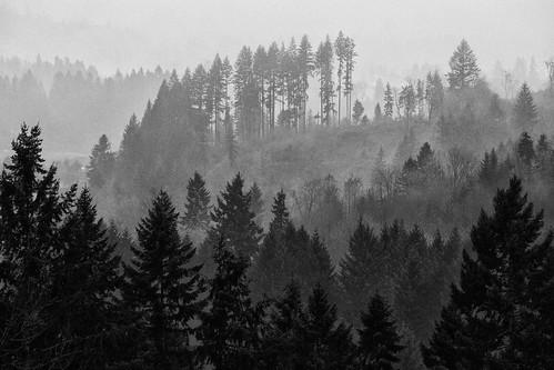autumn trees blackandwhite bw fall fog woodland landscape washington wa canonef70200mmf28lisusm canoneos5dmarkii silverefexpro canon5dmarkii