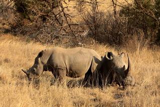 south africa - wildlife