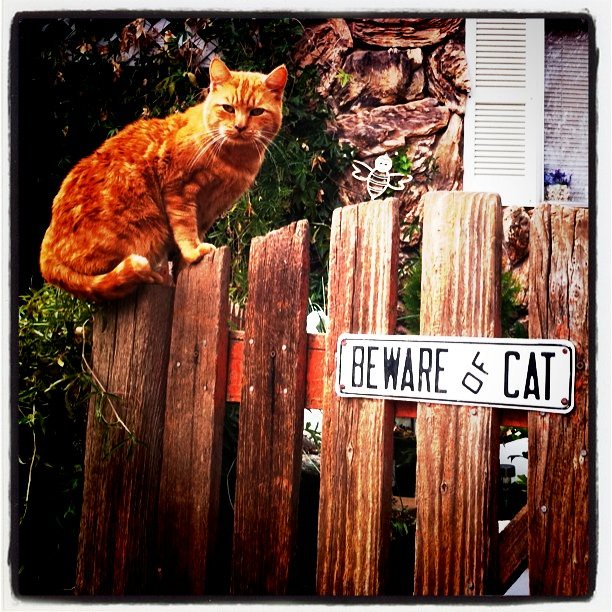 Beware of cat.
