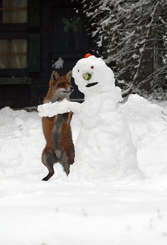 Fox attacks snowman | by Serene Productions