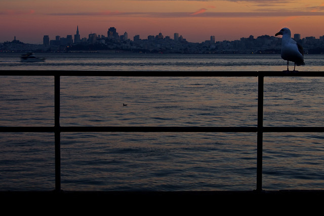 San Francisco Sunset (With a Friend)