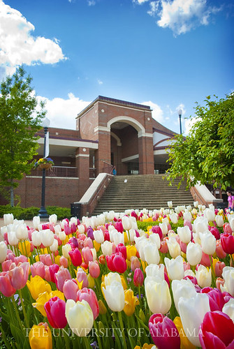 Student Services in Spring