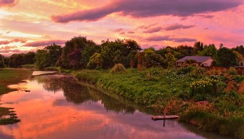 pink trees sunset red newzealand sky house reflection water clouds river garden stream purple swamp wharf gisborne overgrowth 3xp fattal mantiuk08 taruheruriver