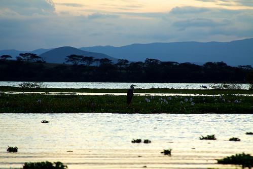 sunset lake reflection bird geotagged kenya stork naivasha