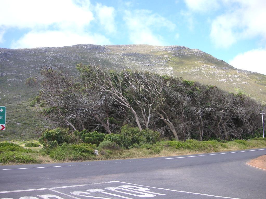 Waaibomen De Bomen Wijzen Door De Sterke Wind Allemaal Dez Flickr