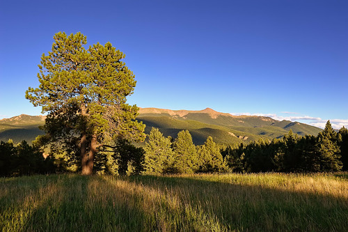 light shadow summer nature forest landscape evening nikon colorado afternoon shadows meadow co grassland ponderosa montane clff montanegrassland mixedconiferousforest