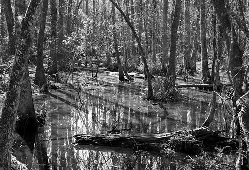 tampabay canonef2470mmf28lusm cypressswamp brookercreekpreserve kaycpics