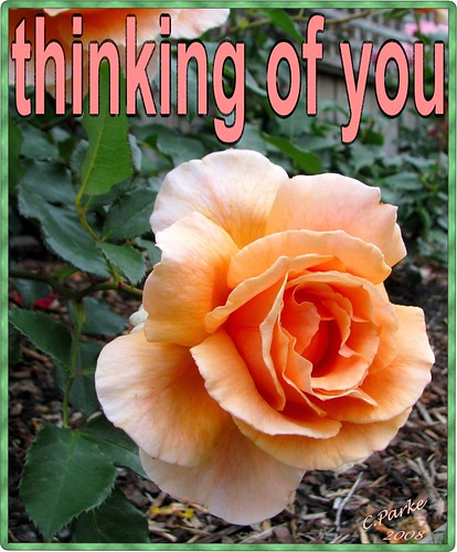 eCard: Love & Friendship - peach rose- thinking of you PD | by you get the picture