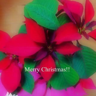 merry Christmas!! #photoikku