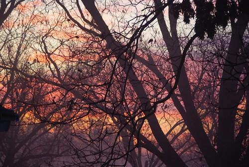 trees winter clouds sunrise vanburen arkansas pecan