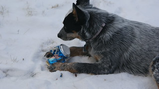 BooZe Hound  !  good to the last drop