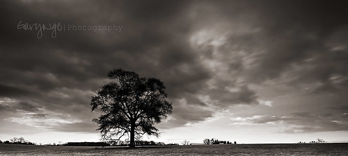 bw cloud tree monochrome mono blackwhite nikon maryland explore frontpage tone 1224mm f4 cloudscape d7000