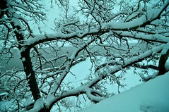 Snow - The Gift From Above