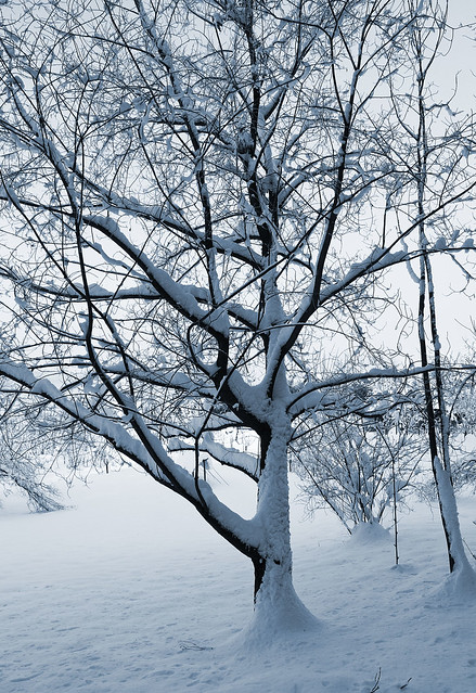 strong winter