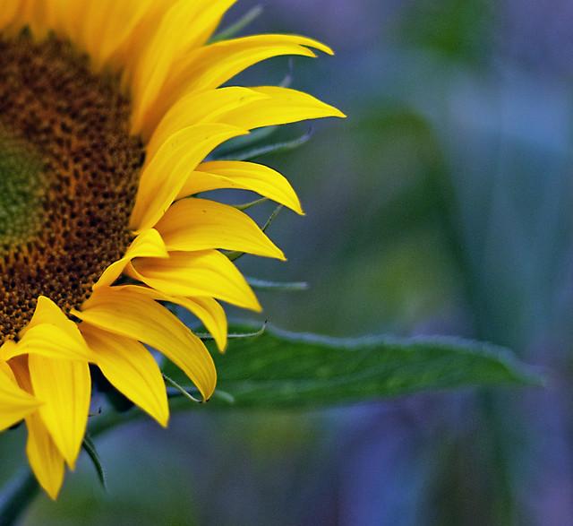 Everyone needs a little sunshine!