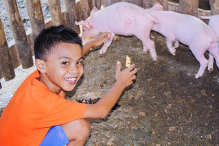 Philippines: Piggery project further diversifies farmland enterprise to support education in Cebu and Manila | by Peace Gospel