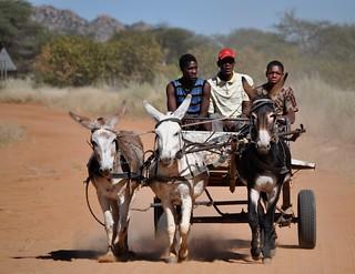 Donkey cart on dusty road in Namibia