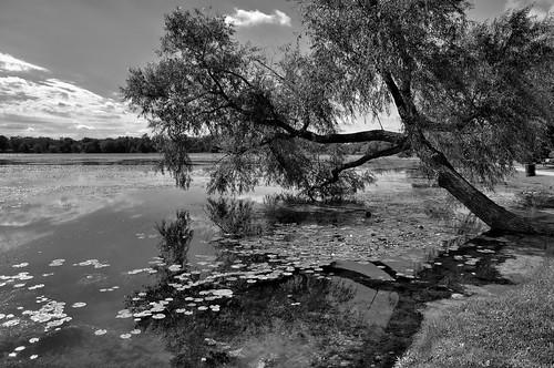 reflections landscapes illinois nikon midwest pinoy blackandwhites monochromes naturescapes lilylake d90 mchenrycounty wetreflections handheldshot monotones bwconversions setholiver1 18105mmnikkorlens circularpolarizers lakemoorillinois