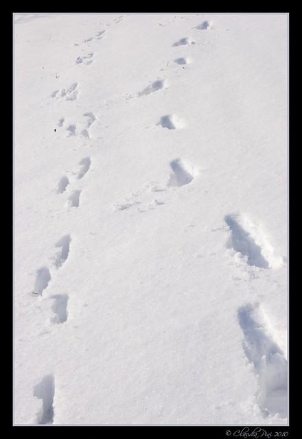 Friends Footprints