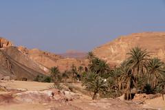 Oase Ain Khudra