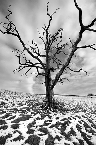 The Dead Tree | by blinkingidiot