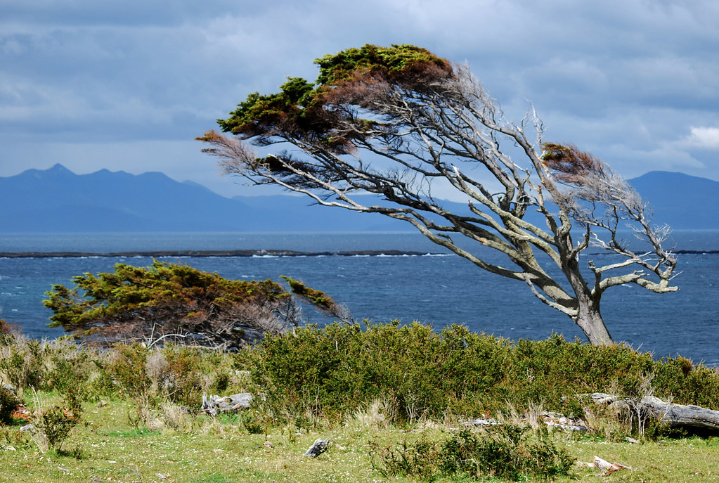 El viento que todo lo doma