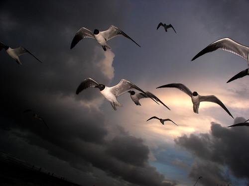 ocean sunset sea summer sky cloud seagulls bird beach birds clouds twilight skies gulf seagull gull aviation gulls beaches breeze seabird seas seabirds breezes openwater summerbreeze justclouds summerbreezes