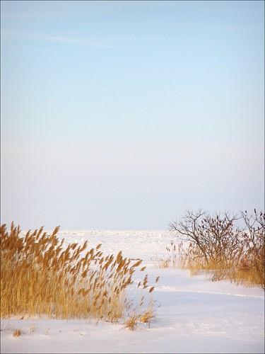 winter ohio snow ice lakeerie geneva bluesky sumac phragmites frozenlake ashtabulacounty themarinaatgenevastatepark