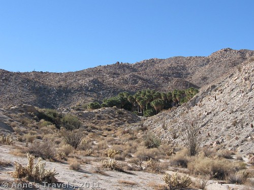 The Palm Bowl in Anza-Borrego Desert State Park, California