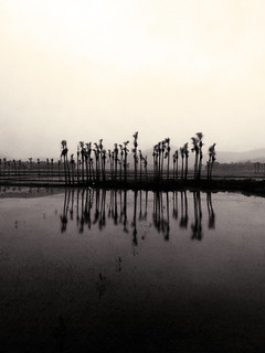 Palm Island | by Chasing Donguri