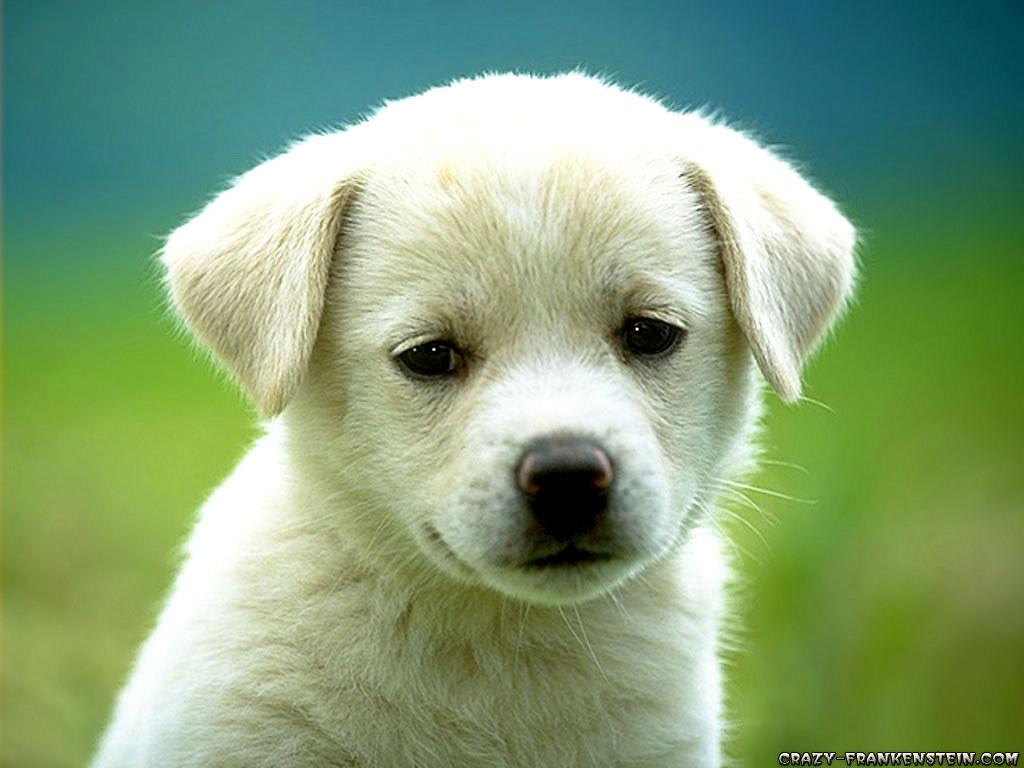 Cute Puppy Dog Wallpapers Balakrishnan Gbalu Flickr