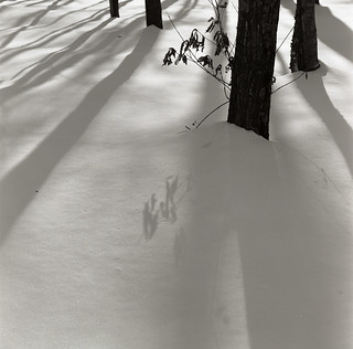 Shadows in the forest | by tomootaphotos