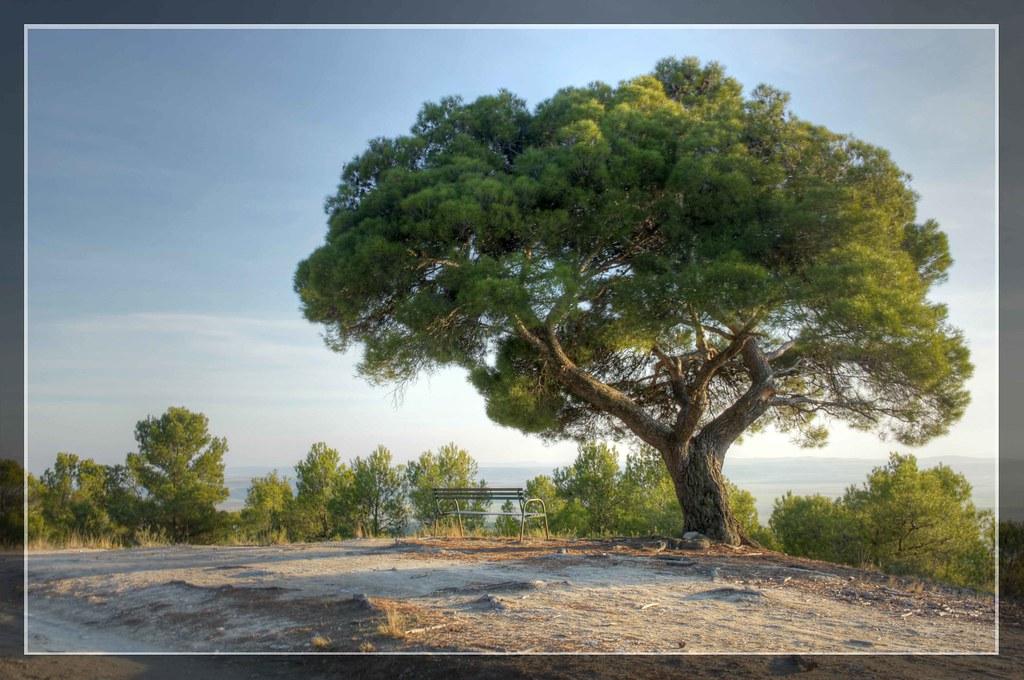 El pino bonito   miradordelega   Flickr