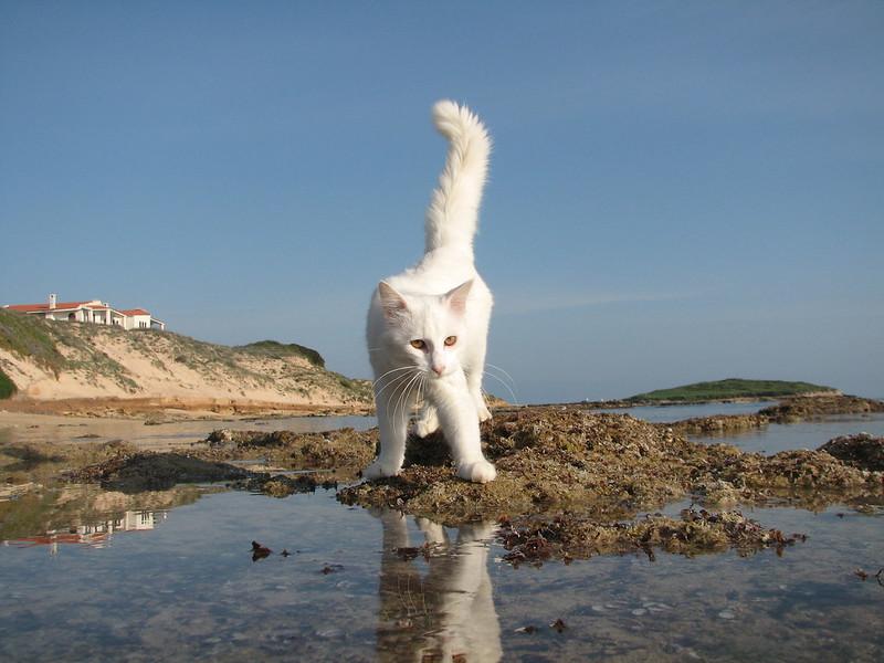 Su Pallosu, spiaggia dei felini.